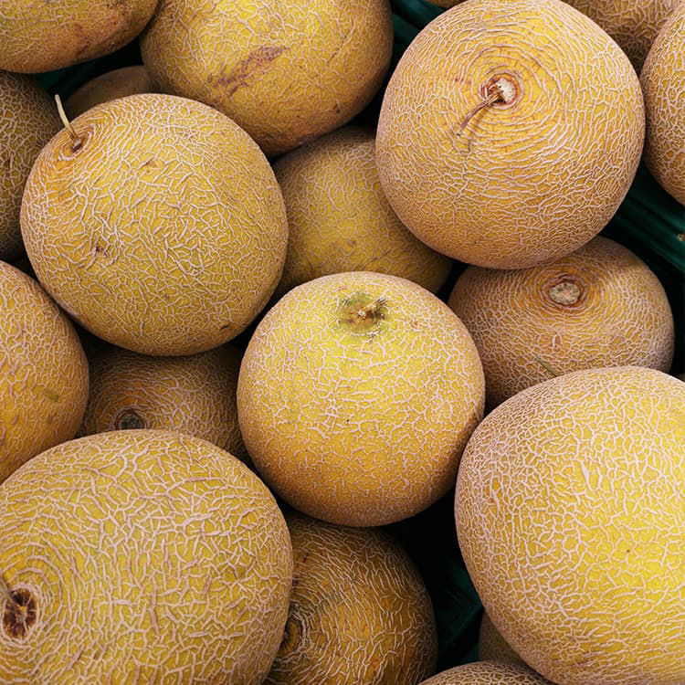 Picture of Cantaloupes