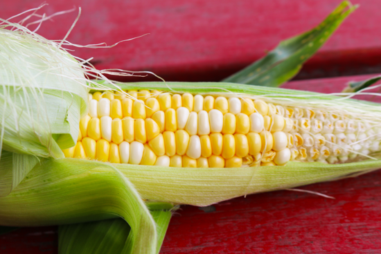 Picture of Bi-color Sweet Corn
