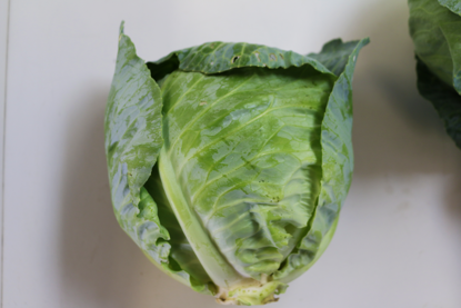 Picture of Green Cabbage