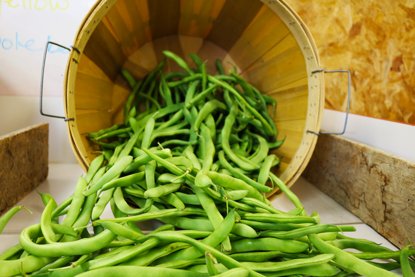 Picture of Pole Beans