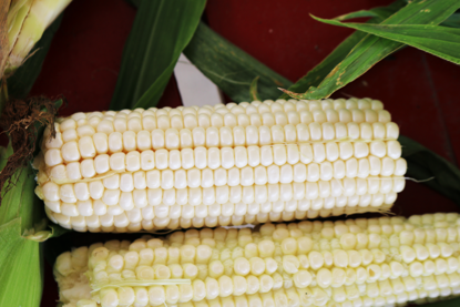 Picture of White Sweet Corn