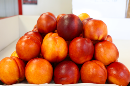 Picture of Nectarines