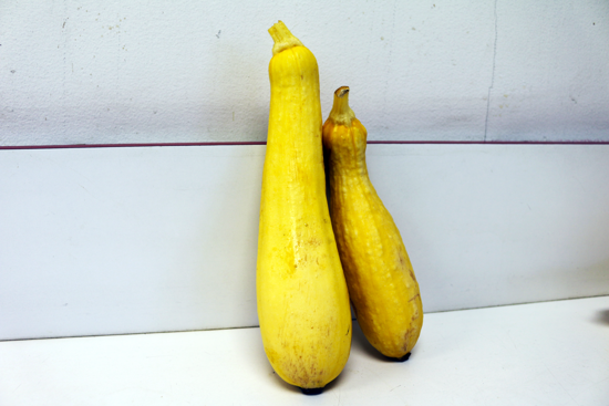 Picture of Yellow Squash