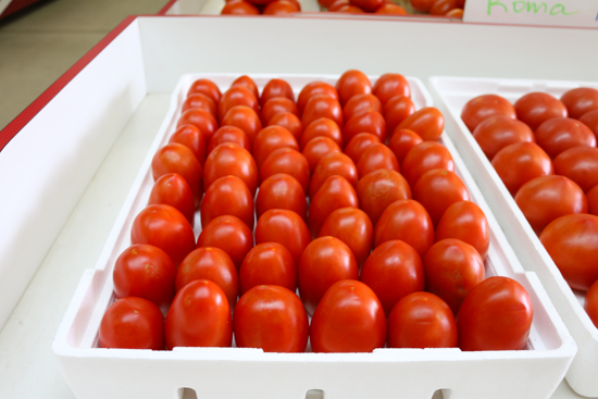 Picture of Roma Tomatoes